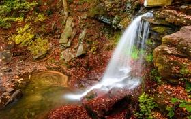 Картинка лес, река, пейзаж, водопад, природа, краски, осень