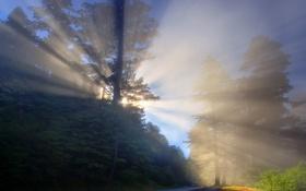 Обои лес, свет, лучи, дорога, туман