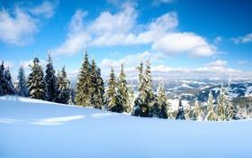 Обои зима, снег, деревья, фото, дерево, пейзажи, вид