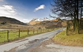 Картинка дорога, поле, деревья, пейзаж, забор