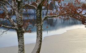 Картинка зима, листья, снег, река, дерево