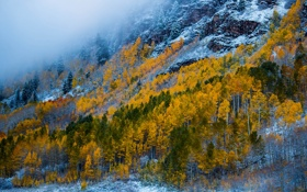 Картинка деревья, горы, осень, склон, снег