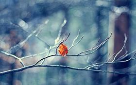 Картинка осень, ветки, цвет, размытость, свет, лист, ветка
