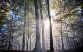 Картинка лес, небо, лучи, свет, деревья, дымка