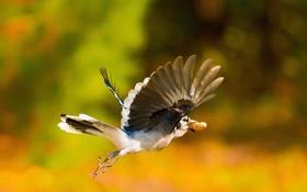 Обои природа, птица, орех