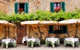Обои цветы, стена, окна, кафе, плющ, столики