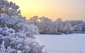Картинка зима, поле, снег, деревья, пейзаж, закат, природа