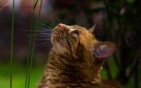 Картинка лето, трава, кот, усы, фон