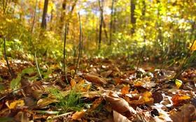 Обои листья, лес, осень, хвощ