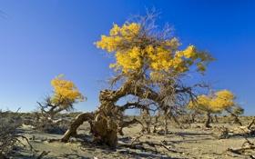 Обои песок, небо, камни, дерево