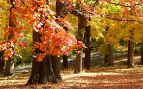 Обои осень, November in Missouri, парк