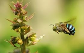 Картинка лето, природа, растение, насекомое