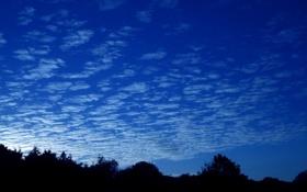 Обои закат, облака, лес, горизонт, небо