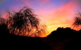 Обои закат, темнота, дерево, вечер, яркость