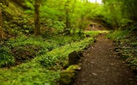 Картинка зелень, лето, тропинка, каменное ограждение