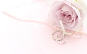 Обои цветок, роза, кольца, лента