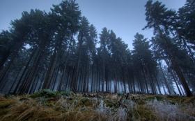 Картинка лес, темно, сумерки