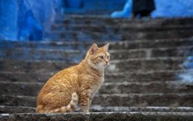 Картинка кошка, кот, город, рыжий, лестница, ступени