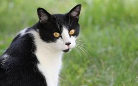 Картинка кошка, трава, взгляд, смотрит, чёрно - белая