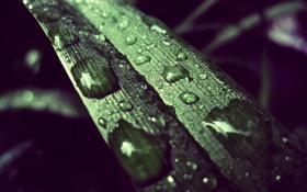 Обои капли, фото, растение, цвета, листок, зелёный, обработка