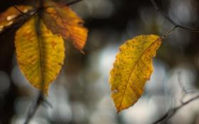 Картинка листья, ветки, блики, фон, размытость, эффект, жёлтые
