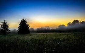 Обои поле, пейзаж, природа, туман, утро
