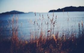 Обои озеро, стебли, островок, боке