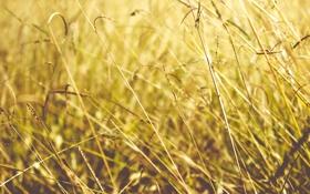 Обои лето, трава, солнце, свет, желтая