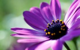 Обои фото, растение, лепестки, цветок, обои, фон, wallpapers