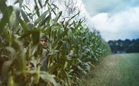 Картинка лето, настроение, мальчик, кукуруза