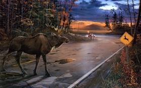Картинка дорога, машина, осень, животные, пасмурно, утки, вечер