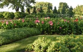 Картинка зелень, трава, листья, деревья, цветы, парк, кусты