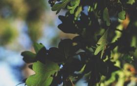 Картинка лето, листья, зеленые