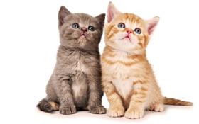 Картинка котята, малыши, два