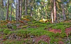 Обои лес, трава, деревья, камни, обрыв, мох, круча