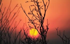 Картинка небо, солнце, закат, растение, силуэт