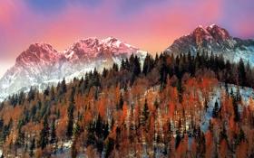 Обои деревья, зима, горы, Италия, снег, Ломбардия