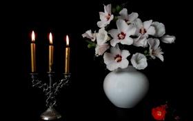 Картинка цветы, свечи, ваза, подсвечник