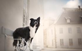 Картинка скамья, улица, собака