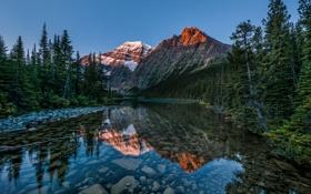 Обои лес, Канада, гора Эдит Кавелл, природа, Jasper National Park, Альберта, озеро