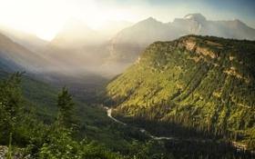 Картинка лес, вид, гора, долина, USA, национальный парк, Glacier National Park