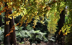 Обои colors, forest, trees, leaves, plants