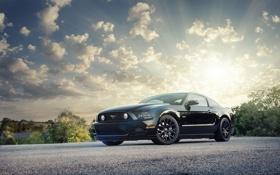 Обои солнце, блики, Mustang, Ford, мустанг, black, форд