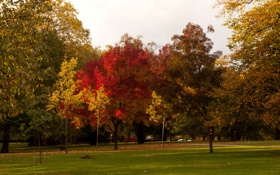 Картинка осень, деревья, природа, парк, фото, газон, Англия