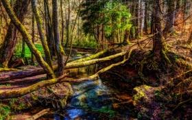 Обои осень, лес, деревья, корни, ручей, мох
