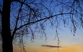 Обои небо, облака, дерево, вечер, силуэт