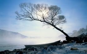 Картинка река, дерево, лодка