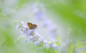 Обои цветы, бабочка, зеленый фон