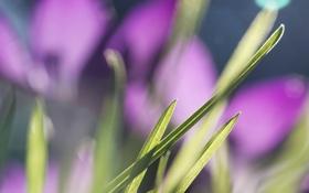 Обои трава, макро, цветы, размытость, солнечно, травинки