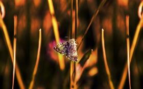 Обои макро, стебли, бабочка, боке